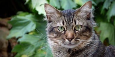 primo piano di gatto con verde come sfondo
