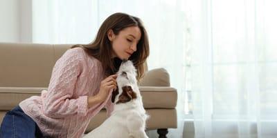 que enfermedades pueden detectar los perros