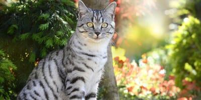 gatto con vegetazione sullo sfondo