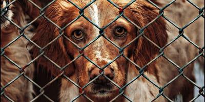 Polacy porzucają zwierzęta w strachu przed koronawirusem? To fake news!