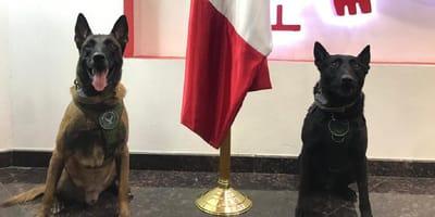 perros policias de baja california los mejores del pais