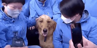 il cane e lo staff medico