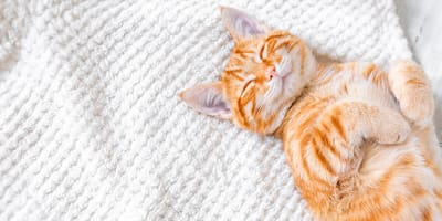 What does it mean when you dream about cats?