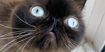 Picture close up of dopey cat Ikiru