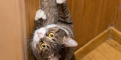 Ihr Kätzchen kratzt an der Tapete: Als etwas zum Vorschein kommt, traut sie ihren Augen kaum
