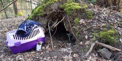 trasportino-viola-e-grotta
