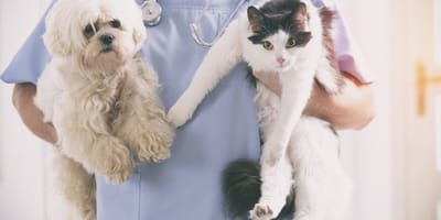 cane-e-gatto-dal-veterinario