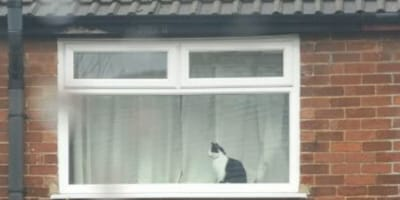 Black and white cat in window