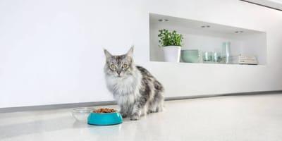 Dlaczego karmienie łączone to optymalny sposób żywienia kota?