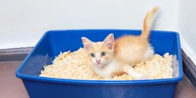 Arena para gatos: ¿cuál es la mejor?