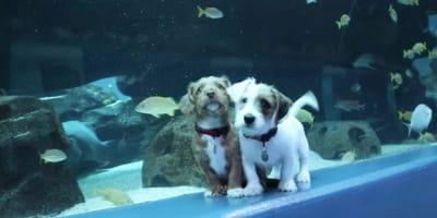 Adorable orphaned puppies roam aquarium closed because of Covid-19