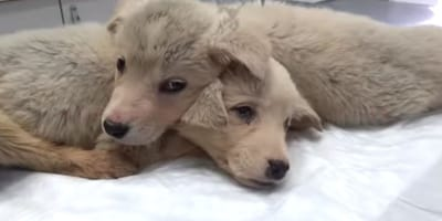 Heartbreaking: rescuer finds pups abandoned in a rubbish bin
