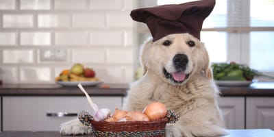 My dog ate onions