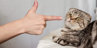 Katze wird geschimpft