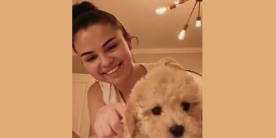 USA zamyka schroniska: Selena Gomez i Miley Cyrus adoptują porzucone psy