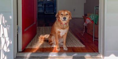 dog sits in doorway