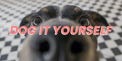 Dog It Yourself: juegos y trucos fáciles para entretener a tu perro durante el confinamiento