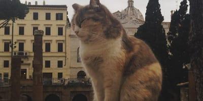 Gatto a Roma