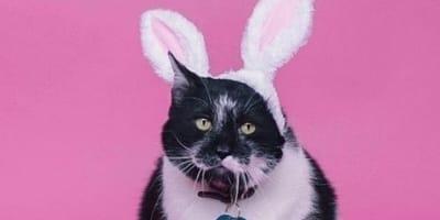 Cat wearing bunny ears