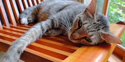 Dlaczego kot wymiotuje? Poznaj możliwe przyczyny
