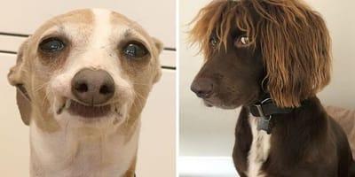cachorro gracioso fotos cuarentena coronavirus