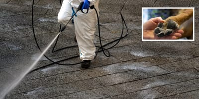 limpieza calle coronavirus lejia peligro perros
