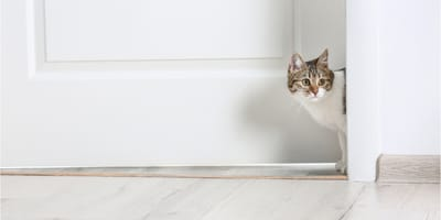 How to prevent your cat from escaping your home