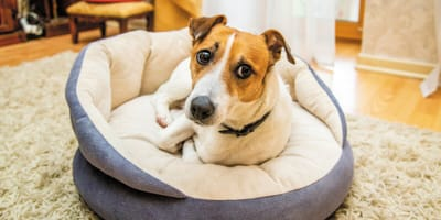 5 signs of stress in dogs
