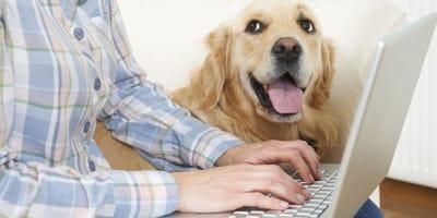 cane al fianco del padrone che lavora al pc