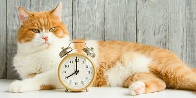 perros gatos horario de verano