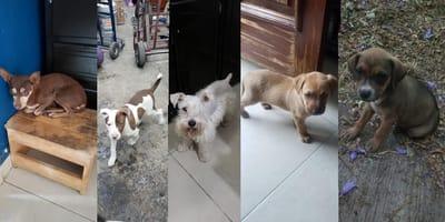 perros abandonados por miedo al covid19