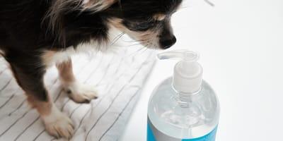higiene salud perros gatos pandemia covid coronavirus