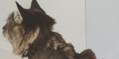 Questi gatti hanno le sembianze di ben altro (Video)