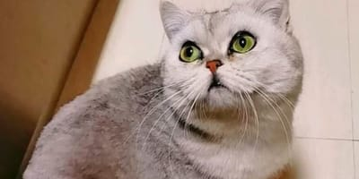 Wuhan: kot brytyjski przeżył 40 dni sam w opuszczonym mieszkaniu. Ale to nie koniec zaskoczeń!
