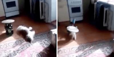 cerveza gato lanzamiento