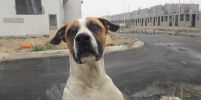 perro abandonado por coronavirus