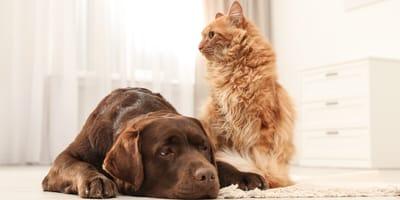 perros y gato aburridos