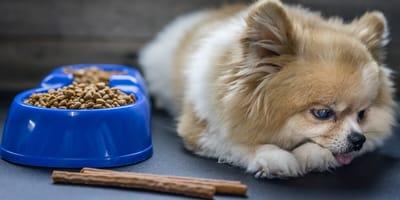 Cuáles son los síntomas de las gastritis en perros