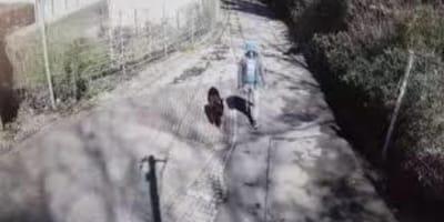 Monitoring rejestruje mężczyznę z owczarkiem niemieckim. Koniec filmu łamie serce