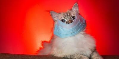 Tigres coronavirus y gatos