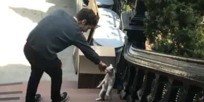 Mężczyzna znajdujący kotkę na ulicy