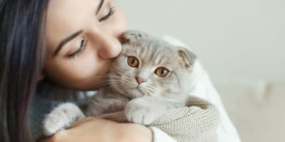 devon rex being kissed by owner