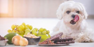 Sobrealimentación en perros: cómo detectarla a tiempo