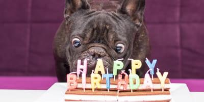 Hund hat Geburtstag