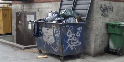 gato huerfano basura