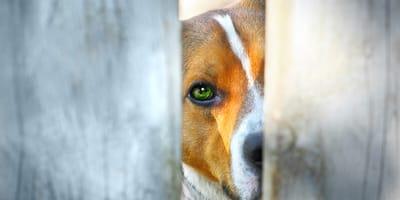 adoptar perro coronavirus