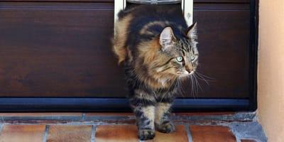 gatto-esce-dalla-cuccia-di-legno