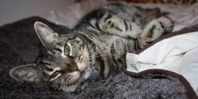 Cat hotel offers free rooms for pets of owners worried about Covid-19
