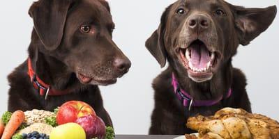 Remedios caseros para curar a los perros con gastroenteritis en casa