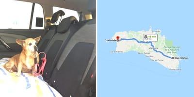 perra menorca taxi adopcion